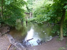 A shady woodland pond